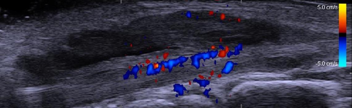 fysiotherapie.echografie.haarlem